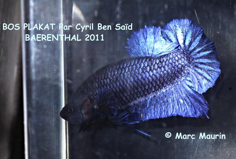 Challenge International 2011, Baerenthal, manche 1. BOS%20PLAKAT%20BAERENTHAL