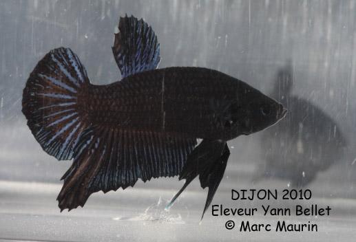 Dijon, Challenge International 2010 Noir%20IMG_7450_Dijon_2010