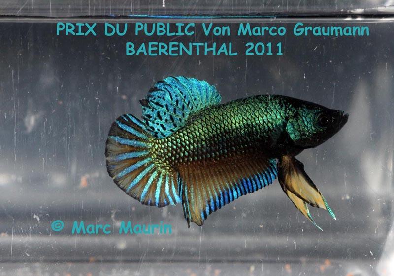 Challenge International 2011, Baerenthal, manche 1. PRIX%20DU%20PUBLIC%20BAERENTHAL